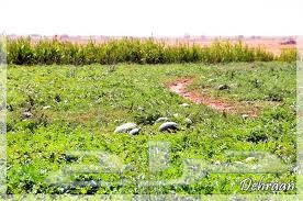 نستقبل عروض والطلب المزارع في جميع محافظات الرياض والقصيم وغيرها