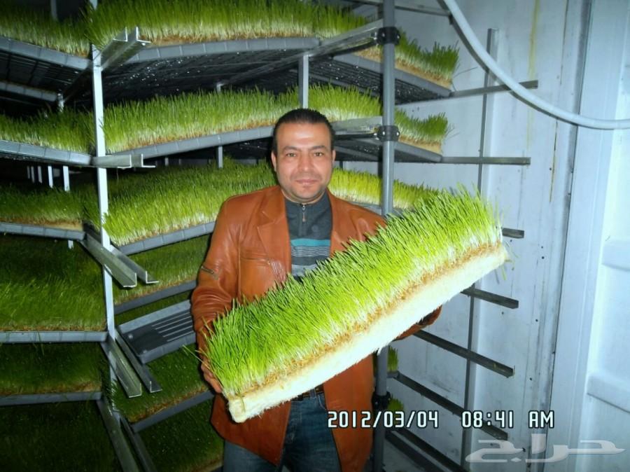 غرف استنبات الشعير
