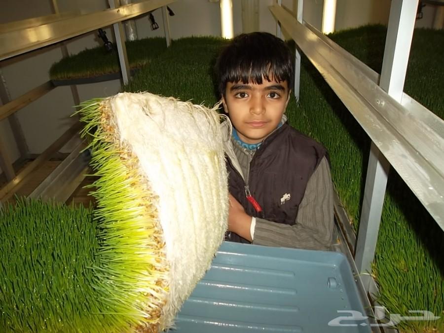 حراج الأجهزة | صواني استنبات الشعير