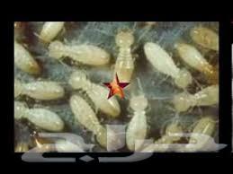 شركة مكافحة النمل الابيض بالرياض 0552050702 الطارق