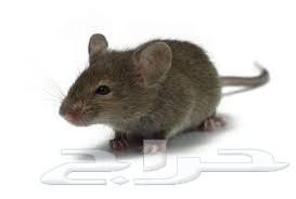 شركة مكافحة الفئران بالرياض 0543340887