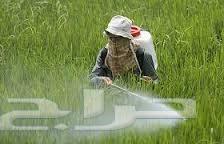 شركة مكافحة حشرات بالرياض العالمية