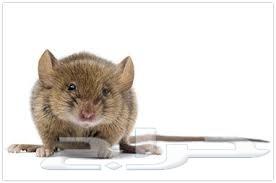شركة مكافحة الفئران بالدمام  0502252040