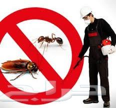 شركة مكافحة حشرات بجدة 0503959302 روضة جدة