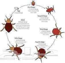 شركة مكافحة حشرات بالدمام  0501214920 التقوي