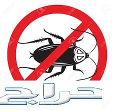 شركة مكافحة الحشرات بالقصيم 0552020037