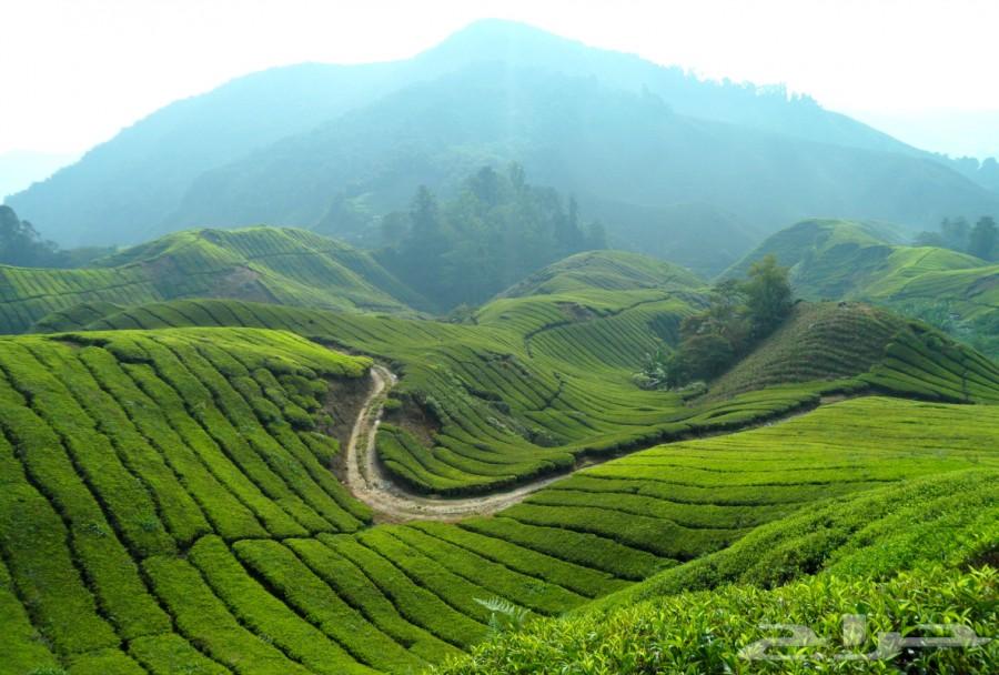 عرض شهر عسل فى مالزيا 14 يوم   جوالات سياحيه