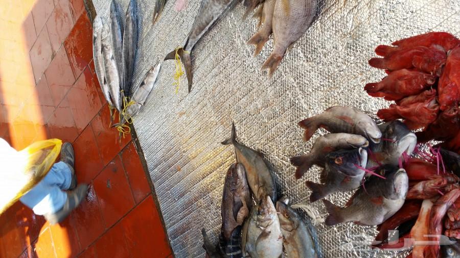 سمك اليوم خلص احجز حق سمك بكرة