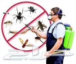 شركة مكافحه حشرات ومكافحة الحمام