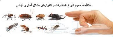 شركة رش مبيد مكافحة حشرات مكافحة الحمام