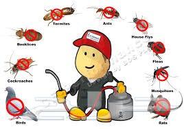 مكافحة حشرات رش فئران