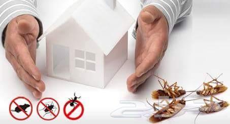 شركة مكافحة حشرات بالرياض ونظافة 0560721164