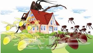 شركة رش مبيد مكافحة حشرات نمل_صراصير_بق_فئران