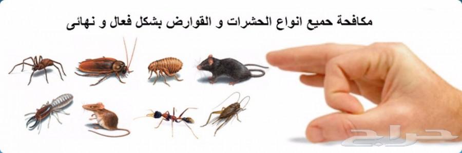 شركة مكافحة حشرات0531334317