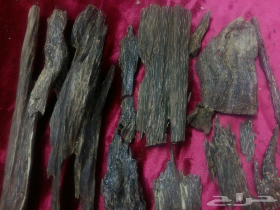 1538341f8 افضل انواع عود الغابات الطبيعيه اللاوسي